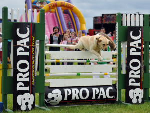 Mullingar International Horse Show - Dog High Jump