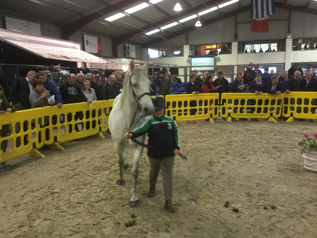 2015 Connemara Pony Sale 176