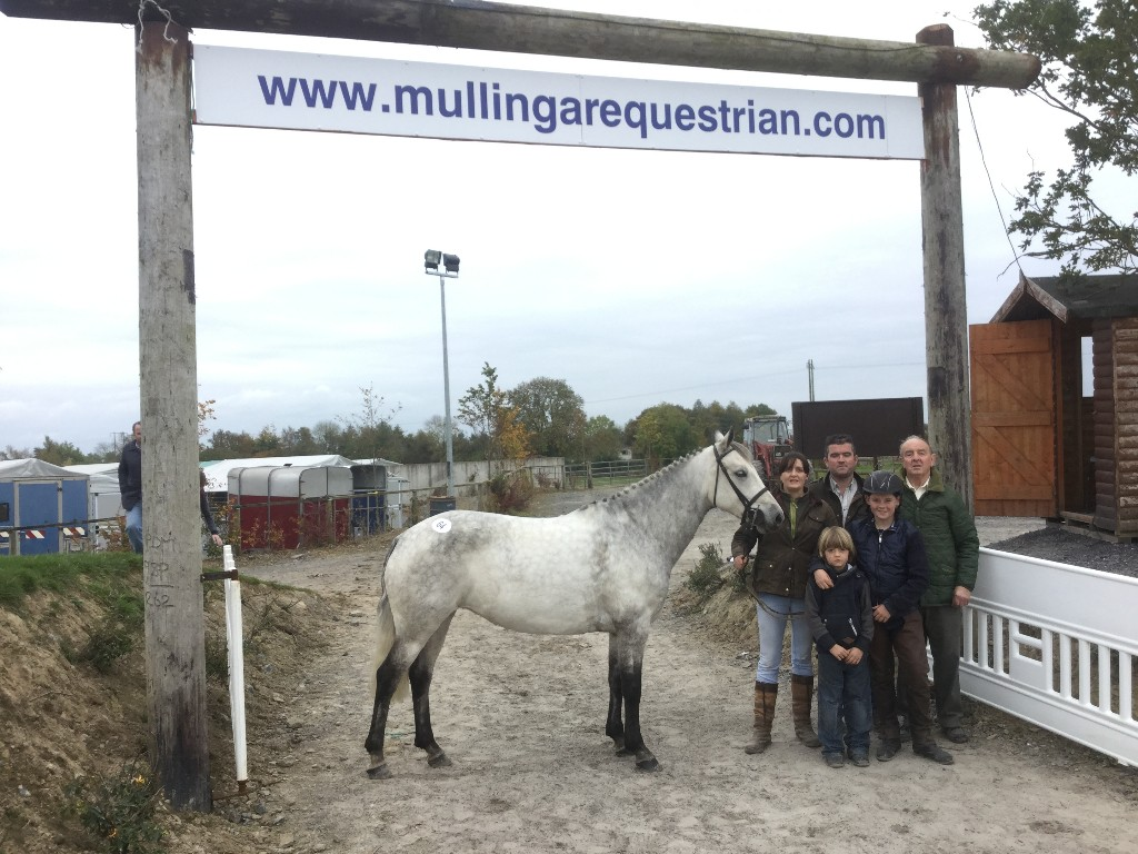 2015 Connemara Pony Sale 186