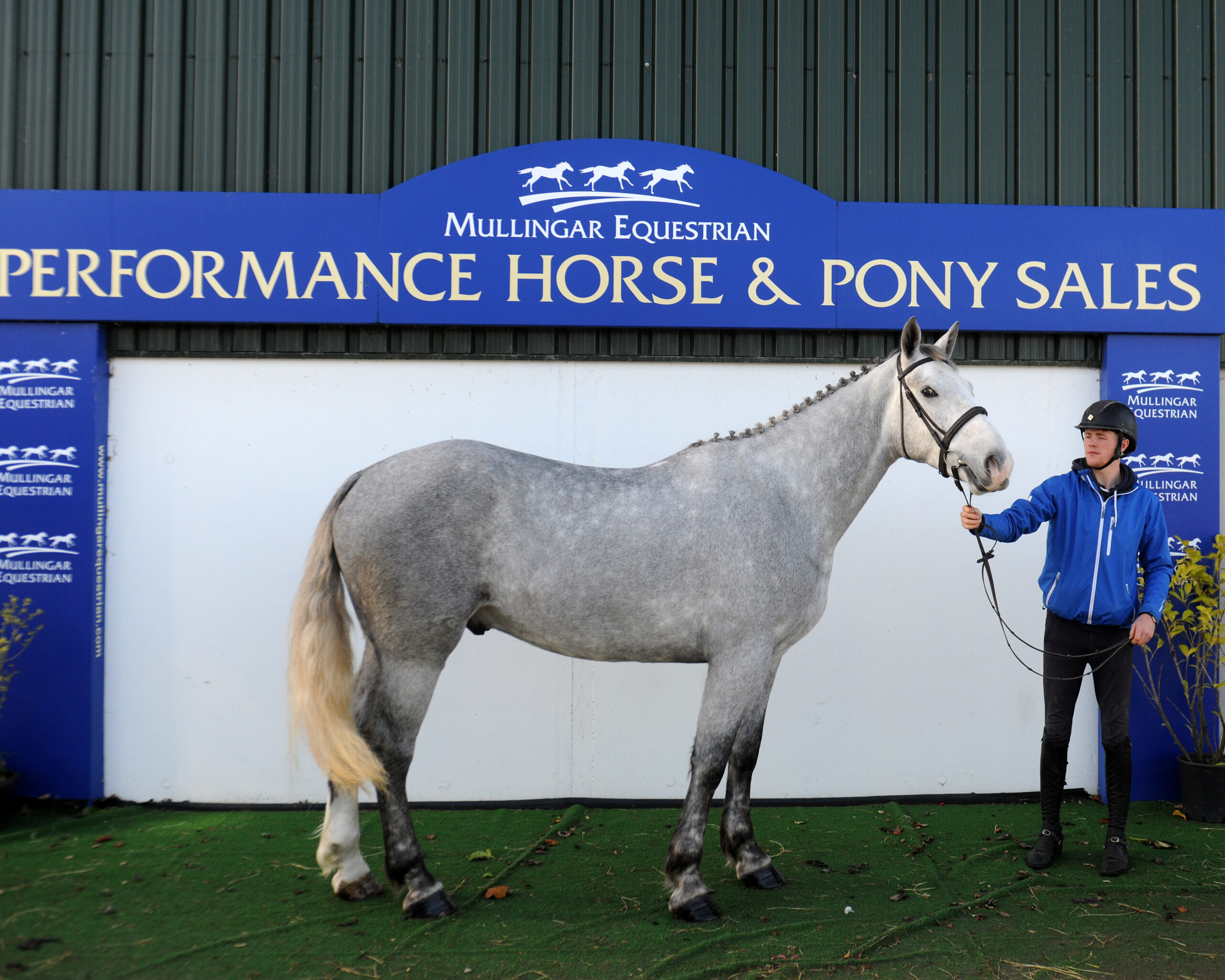 Performance Horse & Pony Sales