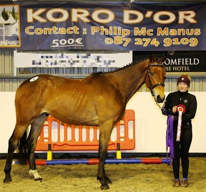 Koro d'Or 3 YO Select Performance Loose Jumping