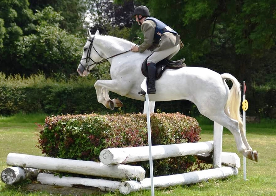 Select Auction of Irish Bred Hunters & Eventers.